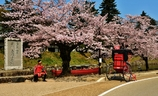 桜花の赤備え