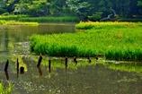 皐月の平池
