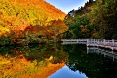 晩秋のもみじ池