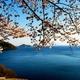 奥琵琶湖春色