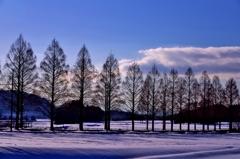 春へ続くメタセコイア並木 Ⅷ