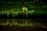 朝光の草花