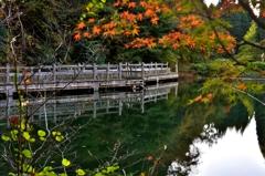 もみじ池の秋