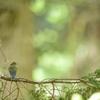 くらい森に住む小さな宝石