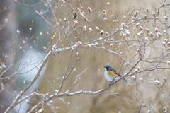 なごり雪と青い鳥