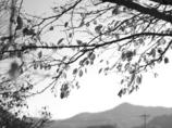 photo2226364