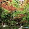 紅葉 in the haru