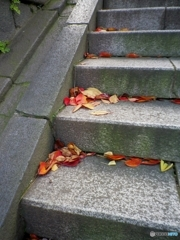 境内の落ち葉