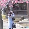 東京お写んぽ・・・荏原神社でさくら満開!