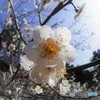 季節を呼ぶ花