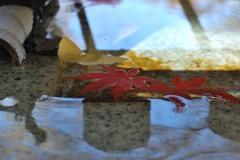 """Dead leaves"""