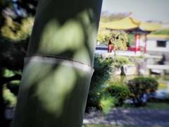 bamboo & shadow