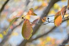 Autumn・・・