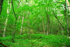 深き森 浅間山