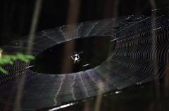 蜘蛛の巣作り
