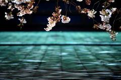 桜上水にて