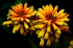 光る花シリーズ1