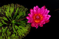 光る花シリーズ4