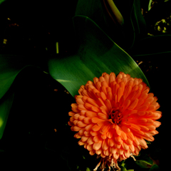 光る花シリーズ7
