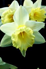 光る花シリーズ2