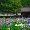 加茂荘・長屋門と花菖蒲