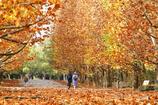 秋色をぬけて