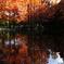 秋深まって