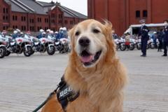 我が家の愛犬(神奈川犬警察)