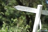 5576 X軸上の蝶