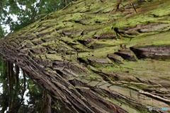 樹(たつき)