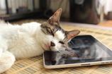 「iPad?なにそれ美味しいの?」