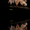 水戸野のシダレザクラ