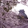 犬山城 春