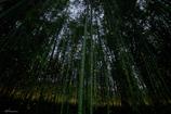 竹林の中で
