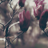 flowers   20160403  #19