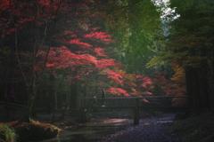 紅葉風景 #7