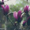 flowers   20160403  #20