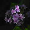 H.G.P flowers 201706  #1