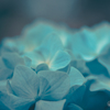 flowers 0529     #10
