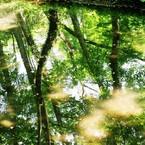PENTAX P30Nで撮影した(新緑の池Ⅱ)の写真(画像)