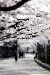 桜並木の遊歩道#4