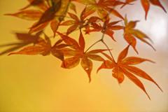 秋陽の森Ⅲ