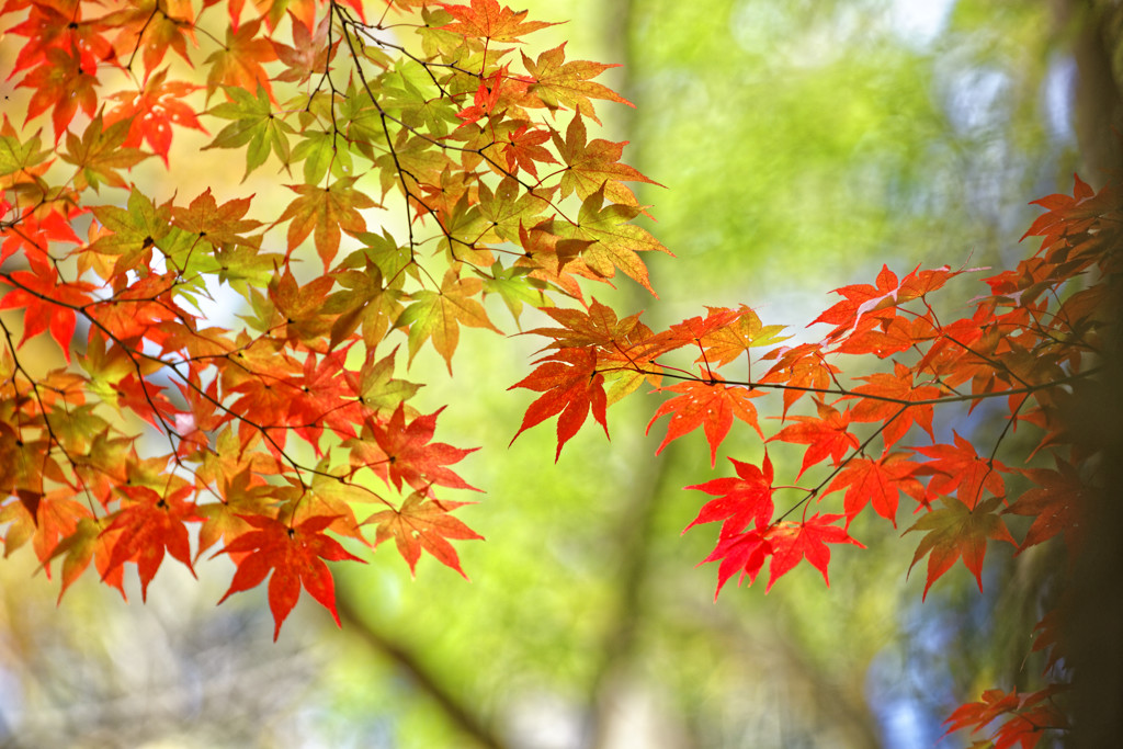 秋陽の森Ⅴ