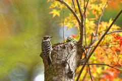 秋陽の森Ⅳ