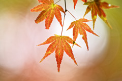 秋陽の森Ⅱ