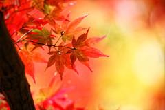 秋陽の森Ⅰ