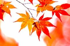 秋陽の森Ⅵ