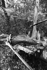 都有地の雑木林