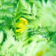 NIKON NIKON D700で撮影した植物(新緑に潜む)の写真(画像)