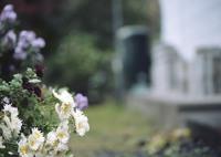 MAMIYA 645 PROで撮影した植物(いつもこの場所に。)の写真(画像)